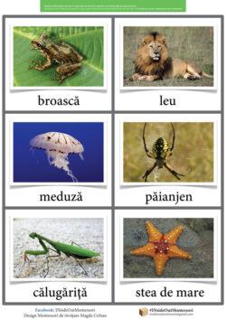 Herbivore, carnivore, omnivore