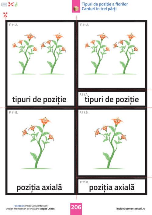Floarea - 6-12 ani