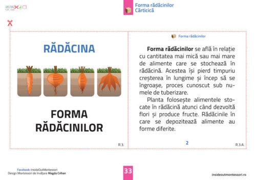 Radacina - 6-12 ani