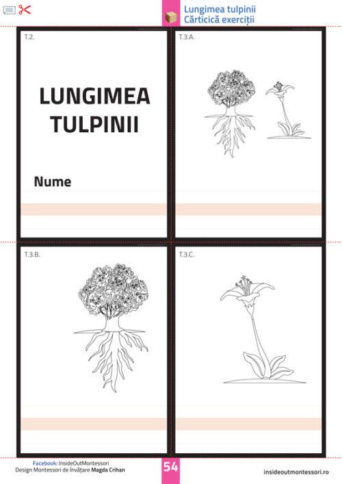 Partile unei plante - Tulpina