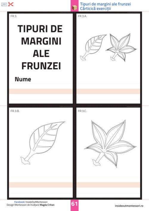 Partile unei plante - Frunza