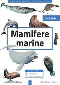 Mamifere marine